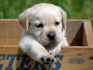 Cute-baby-animals-22