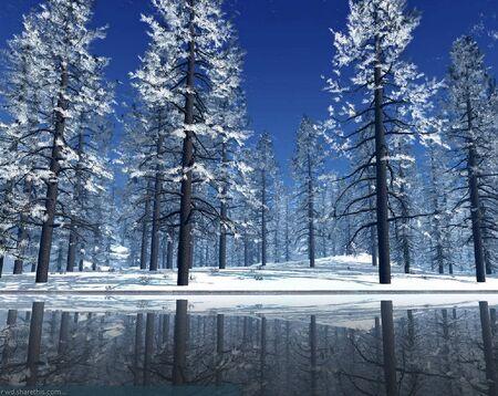 WinterPineTrees
