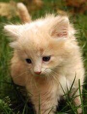 AnnaWise's Kitten