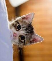 Cammy's Kitten