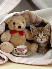 Fizzie's Kitten