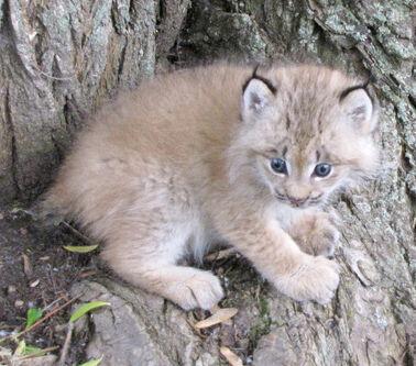 Sasha; Vaska's adopted pet