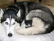 Kitten1456 03