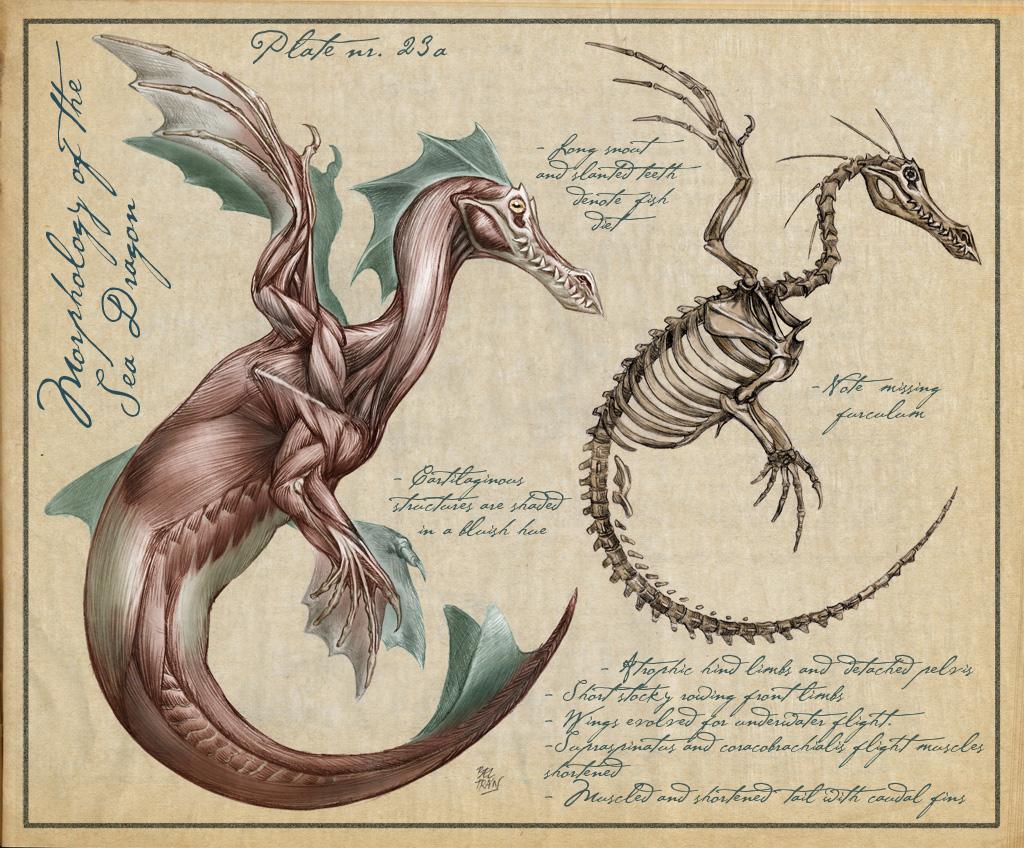 Attractive Anatomy Of Mythical Creatures Elaboration - Anatomy Ideas ...
