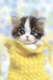 Ob's Kitten