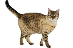 WarriorCat1