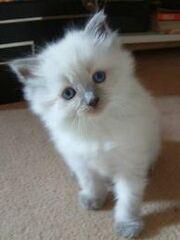 Ghost's Other Kitten
