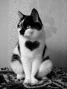 Nina's newcat2