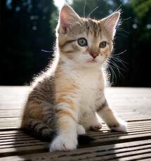 Anne-kitten
