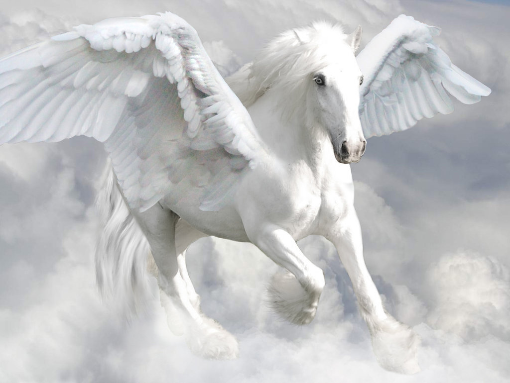 Image Delphinia Aqua S Pegasus Jpg Camp Half Blood