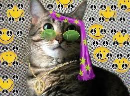 Jennas Kitten
