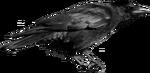 CrowLeft