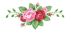 Roses-divider-550 (1)