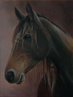 Kaimanawa horse painting