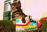 Kitten018