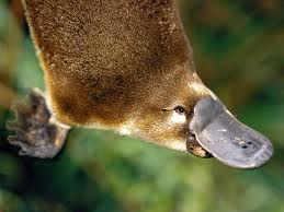 WonderPlatypus