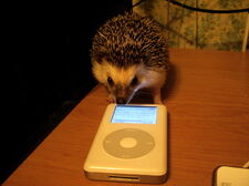 Hedgehog2 zpsde046c3c