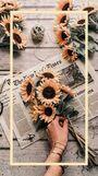 Sunfloweraesthetic2