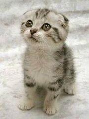 Lowdy's Kitten