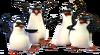 Four penguins