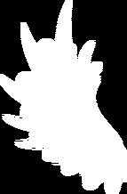 Transparent darker white wing by k1ku stock-d5baa96 (1)