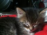 Pets/Rhi's Kitten