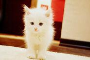 Ninacat3