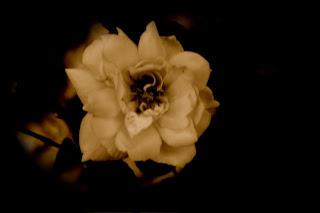 Dark depressed flower