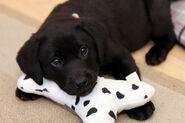 Flick's Puppy