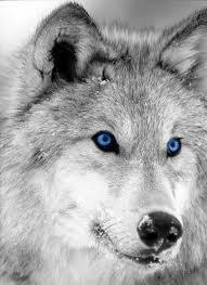 Dianawolf