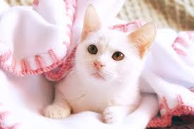 Bee's Kitten
