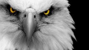 Camp Jupiter Eagles