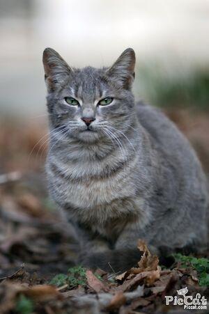 River's Cat