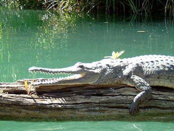 Ray's Croc Form