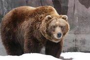 Dex Bear