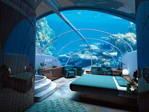 Shark Dorm