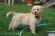 Bennet Dog 2