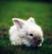 Serena Bunny 2