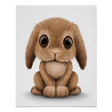 Cute brown baby bunny rabbit on white poster-r86d459aa0fca4220b745f7b20d381085 wvw 8byvr 324