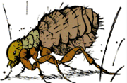 Calvin the Flea
