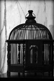 Empty Cage