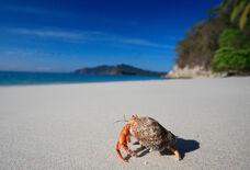 I0239-Hermit-Crab