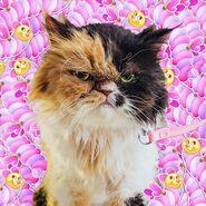 Cat in pufflers