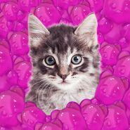 Cat in pink bear