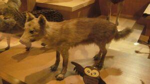 Honshu-wolf