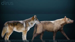 Canis dirus Sergiodlarosa