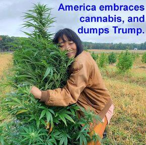 America embraces cannabis, and dumps Trump
