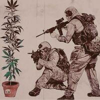SWAT and cannabis plant