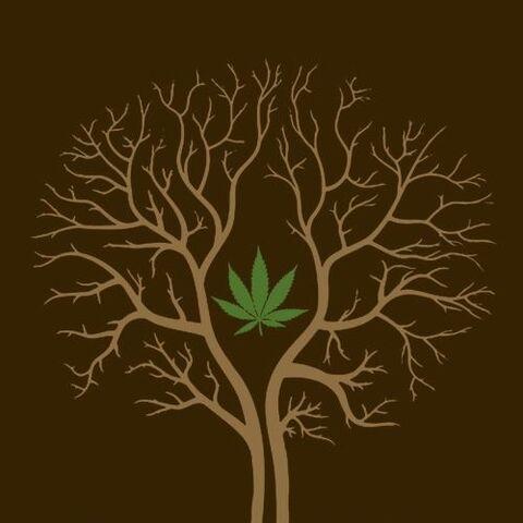 File:Tree of life.jpg