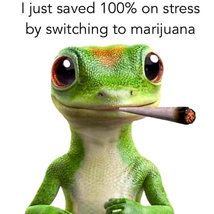 Cannabis is safer   WeedWiki   FANDOM powered by Wikia